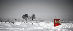 red box in the snow (Redheadwondering) Tags: sonyf1450mmlens sonyα7ii salisburyplain wiltshire winter snow snowday landscape trees red selectivecolour selective blackwhite