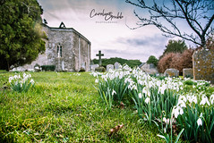 Churchyard in winter (Caroline Grubb Photography) Tags: inglesham st john baptist pray prayer worship religion church 1000 cotswolds winter snowdrop flowers cemetary graveyard