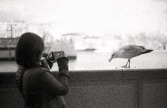 Photo of a Photo 3 (Myahcat) Tags: london 35mm film bw blackandwhite kosmophotomono mono yashica yashicafri winter street city inception photoofaphoto gull streetphotography filmphotography