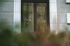shadow of doubt (jesuiselouise) Tags: minoltasrt100x agfavista200 35mm analog film window building shadow bushes lurking flowers