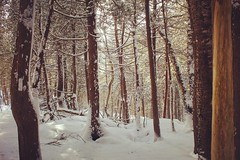 (jessalynn_sammons) Tags: shotoncanon canoncanada canon winterday sunnyday sun niceday light trees forest lovenature explore thebrucetrail brucetrail nature hike winter ontario