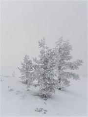 Winter Trees _93151 (uwe_cani) Tags: panasonic g9 finnland finland skandinavien scandinavia lappland lapland ylläs winter schnee snow natur nature outdoor landschaft landscape bäume trees nebel fog yllästunturi ylläsjarvi