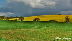 Field of Gold (alannoonan) Tags: field cork agriculture agri nikon