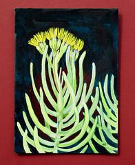 Senecio (M.P.N.texan) Tags: botanical art paint painting succulent senecio handpainted original mpn