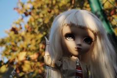 yeux bleus (Alluka Zoldyck) Tags: pullip custo custom alpaga hair wig handmade classical alice sepia version white groove obitsu