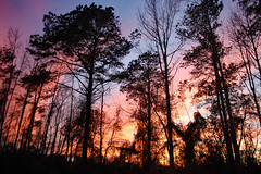 Woods At Sunset. (dccradio) Tags: lumberton nc northcarolina robesoncounty outdoor outdoors outside nature natural march spring springtime sunday sundayevening sundaynight evening silhouette tree trees treebranch branch branches treebranches treelimb treelimbs sky colorful colorfulsky sunset sunsetsky clouds pinkclouds bluesky nikon d40 dslr scenic woods wooded forest beauty beautiful pretty landscape