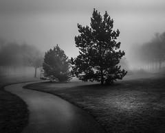 Misty (overhoist) Tags: overhoist canon canoneos5dmarkiii mistymorning misty bathgate scotland