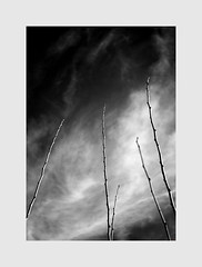 Winter Sky (photo_secessionist) Tags: winter sky cold clouds tree limbs blackwhite bn bw monochrome pentax k3 smcaf250mmlens digital pentaxart minimalist