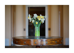 DAFFODILS IN THE HALLWAY (Barry Haines) Tags: trelissick house estate cornwall nt national trust sony a7r2 a7rii flickrsbest
