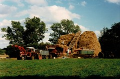 Ransome's Thresher Thatching in Stoke-by-Nayland 1990's Photo's by Alf Jefferies (Photos by Alf Jefferies) Tags: english country garden view thresher ransomes haystack hayrick thatcher men working fields photos by alf jefferies tractor suffolk england 1990s tied cottage massey ferguson 165 168 175 188 178