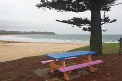 Black Head Beach (Gillian Everett) Tags: blackhead beach nsw bench pink blue 365 2019