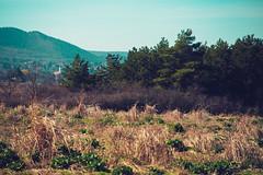 KRIS8111 (Chris.Heart) Tags: erdő buda budapest túra természet forest nature hiking