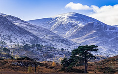 Roll On Winter (Stoates-Findhorn) Tags: scotspine autumn glencannich scotland mountains trees hills 2018 highland snow beauly unitedkingdom gb
