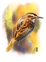 Sedge Warbler (Z0501) #bird #birding #sketchingdaily #fåglar #arts_gallery #sketch #artofinstagram #animals #birdsketch #animallovers #art_spotlight #your_best_birds #illustrationartist #sketchart #ig_birds #art #instagood #visualdevelopment #instaart #dr (ArtMagenta) Tags: birds birding birdwatching birdpainting