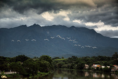 Squadron of herons (Otacílio Rodrigues) Tags: garças herons voo flight montanha mountain rio river árvores trees reflexos reflections natureza nature nuvens clouds urban resende brasil oro supershot saariysqualitypictures
