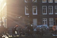 DSC_0659 - Copie (elisa.savio) Tags: amsterdam trip travel voyage landscape bike photographer nikkor nikon