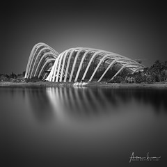 Sensual Shapes (Alec Lux) Tags: bw bnw singapore architecture art black blackandwhite building city cityscape cloudforest curves design exterior fine fineart flowerdome gardensbythebay haida haidafilters lines longexposure modern outdoor outside reflections skyline urban water white