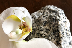 Never Take Your Orchids for Granite! (ruthlesscrab) Tags: contrast orchid granite werehere wah hereios