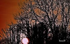 Abstraction solarisante (DOMVILL) Tags: ciel coucherdesoleil domvill nuages wwwflickrcompeoplevildom abstrait soleil arbre