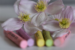 Pastel 5 (PhilDL) Tags: macromondays macro pastel pastels pastelcolours flower clematis clematismontana colour colours color colors colourful subtle subtlety softtones softfocus softness crayons oilpastels focalpoint blur blurring exposure contrast hues highlights shadows shades lightshade light levels dark vibrance foreground background camera dslr photography photo lens nikon nikonuk tamron nikond810 90mm