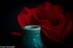 A Hole for a Single Red Rose - HMM (11Jewels) Tags: canon tamronsp90mmf28divcusd budvase hole rose macromonday