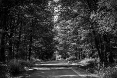 Through the woods (Ruth Flickr) Tags: brenne europe france enpassant greenroad holiday lane summer woodland woods prissac indre fr