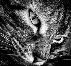 Face (gillesgilles2) Tags: minou chat cat