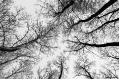Trees (Giada Cortellini) Tags: trees alberi nature natura perspective prospettiva landscape paesaggio cielo sky albero rami branches forest foresta woods inthewoods