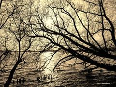Trees 16-2-2019 (k.stoof) Tags: tree boom meer amsterdam lake backlight tegenlicht landscape