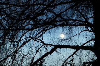 Early Evening Moon..x