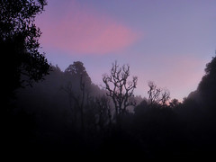 Timber Trail in Winter (Magryciak) Tags: 2018 winter cold sky newzealand bike trip sunrise early morning panasonic lumix timbertrail red pink colour clouds