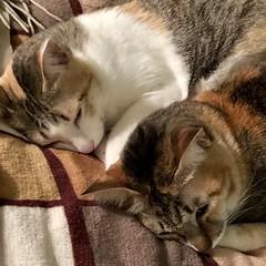 우리집 꼬맹이들 나란히 잔다. #BB8 #cats #catsofinstagram #sleepingbeauty (Seattle Raindrops) Tags: bb8 cats catsofinstagram sleepingbeauty