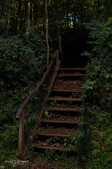 Entraditas (Andres Ulibarrie) Tags: caminos escaleras bosques arboles vegetacion reservanatural iguazu argentina roads stairs forests trees vegetation natural reserve