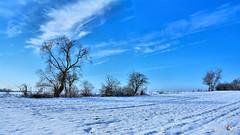 Winter blue sky (Szymon Karkowski) Tags: outdoor winter snow blue sky cloud clouds field tree trees landscape nature horizon silesian voivodeship gliwice poland nikon d7100
