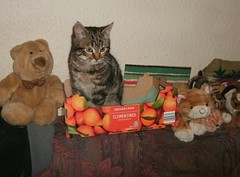New addition..... (skipscales) Tags: cat kitten tabby farm indoors box
