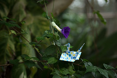 Paper Crane and Thunbergioideae (Errai 21) Tags: ツルとツンベルギア origami ツル 折り紙 折り鶴 おりがみ papercrane  origami 花 flower 花写真 flowerphoto origamiphoto 花が好き thunbergioideae ツンベルギア  paper crane