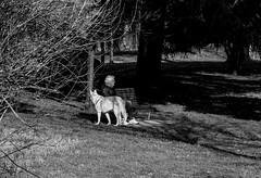 Compagni nella solitudine (fabrizio_buoso) Tags: noiretblanc nikonclubit monocromo martesana biancoenero bw bianconero blackwhite blackandwhite