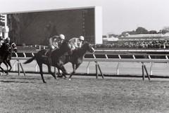 Horse racing (Architecamera) Tags: monochrome horse racing blackandwhite blackwhite