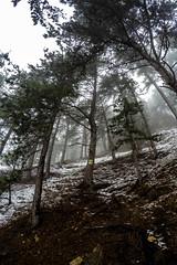 0136_GOPR5191 (marcellszmandray) Tags: ausztria hohewand gutensteinialpok alpok viaferrata kirándulás tavasz hó