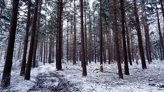 winter (Jos Mecklenfeld) Tags: winter snow schnee sneeuw forest wald bos nature natur natuur nulbos westerwolde sonya6000 sonyilce6000 selp1650 sonyepz1650mm niederlande nederland terapel groningen netherlands nl