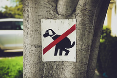 no pooping [Day 3721] (brianjmatis) Tags: yard no poop funny dog iphoneography sign tree photoaday project365 groverbeach california unitedstatesofamerica us