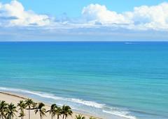 The View (KaDeWeGirl) Tags: florida hollywood beach blue atlantic ocean palm trees explore