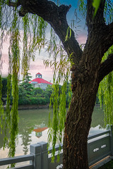 Willow Tree and Red Top (jgaosb) Tags: jaygao shanghai china jiading river bank green red water reflection willow tree interesting famous best most beautiful romantic cute