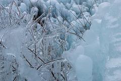 2019_095 (KusodebuJAPAN) Tags: japan saitama asigakubo chichibu icicle illumination 埼玉 秩父 芦ヶ久保 あしがくぼの氷柱 氷柱 イルミネーション