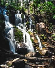 00067 (blakforest) Tags: photography tooronga falls waterfall australia victoria newbie new learning longexposure exposure composition trees green edit nature outdoors wildlife wild rainforest fujifilm xt3 fujifilmxt3 wideangle 1024mm up dark blakforest contrast sky landscape waterscape scapes greenery