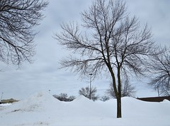 Snowmounds (pirate johnny) Tags: snow winter trees february minnesota