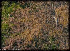 Winter Waiting (pootlepod) Tags: canon wildlife heron trees landscape smallinframe nature natural lakes waiting watchin raw rspb naturereserve reserve devon winter southwest england feather birds flight fauna bill beak eye eyes feet legs naked young plumage old female male friend