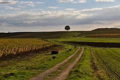 vignoble tarnais (jean-marc losey) Tags: france occitanie tarn surlaroute vignoble automne autumn arbre tree randonnée d700