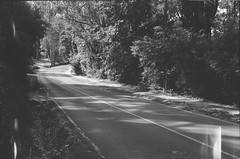 Mount Dandenong Tourist Road (photo 2) (Matthew Paul Argall) Tags: beirettevsn 35mmfilm blackandwhite blackandwhitefilm kentmere100 100isofilm road street mountdandenongtouristroad