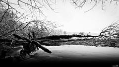 Un coup de pouce à la nature (Un jour en France) Tags: nature arbre rivière monochrome canoneos6dmarkii canonef1635mmf28liiusm noiretblanc noiretblancfrance